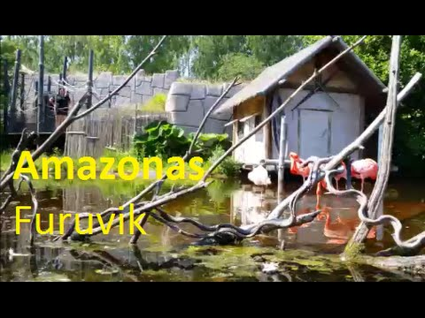 Amazonas Furuvik Sweden Pov Youtube