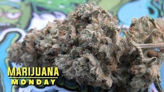 Gorilla Glue #4 MariĴuana Monday