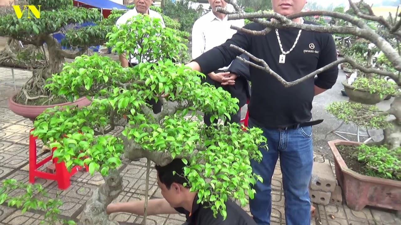 5 triệu một cây sanh xem mua bán ngày cuối hội