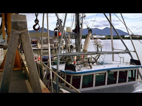 Stanford students study fish habitat in southeast Alaska