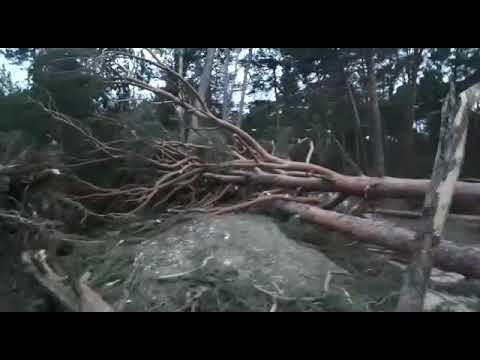 Efectos del temporal de viento en Quintanar de la Sierra