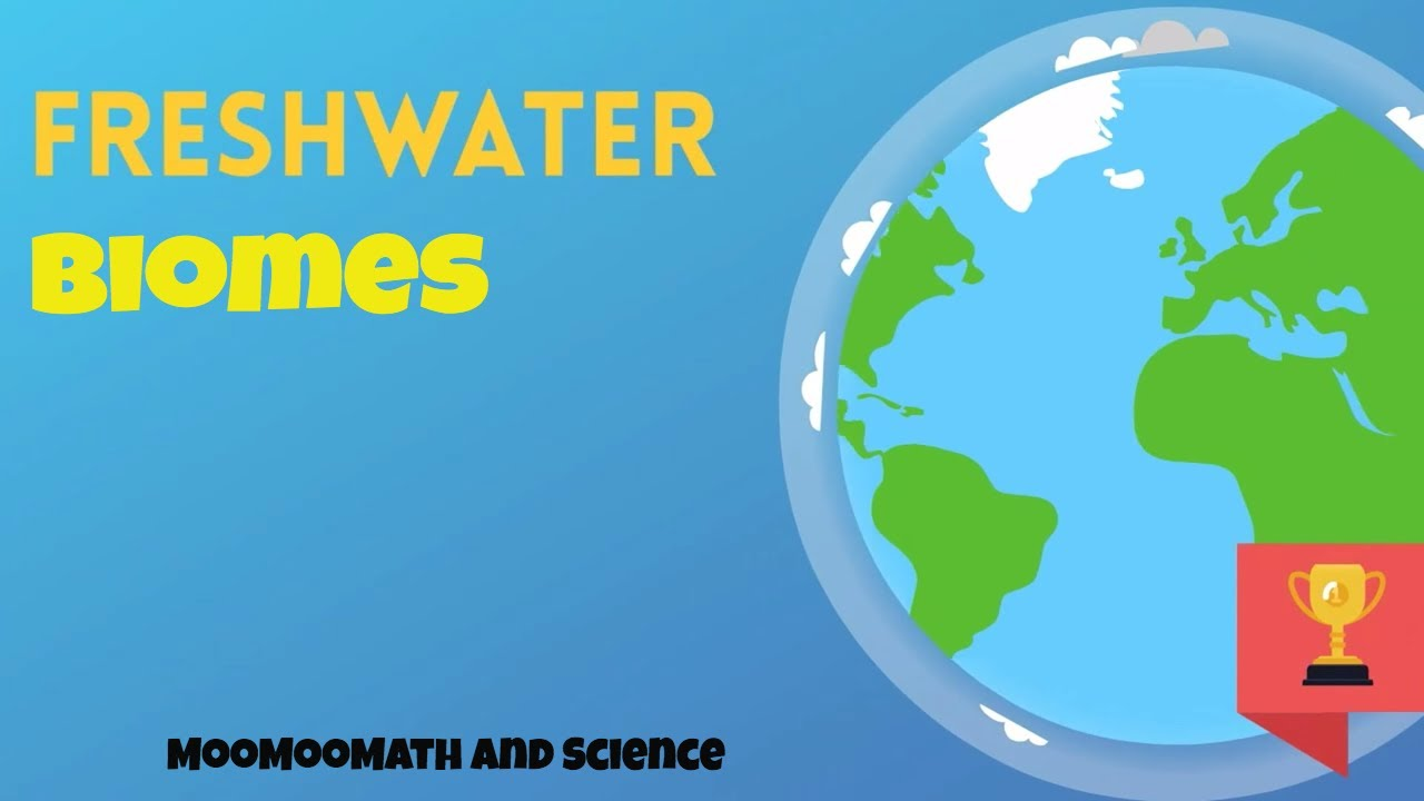 Freshwater biomes youtube freshwater biomes gumiabroncs Choice Image