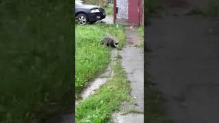 Инцест котов 😁😁😁😁😁😁