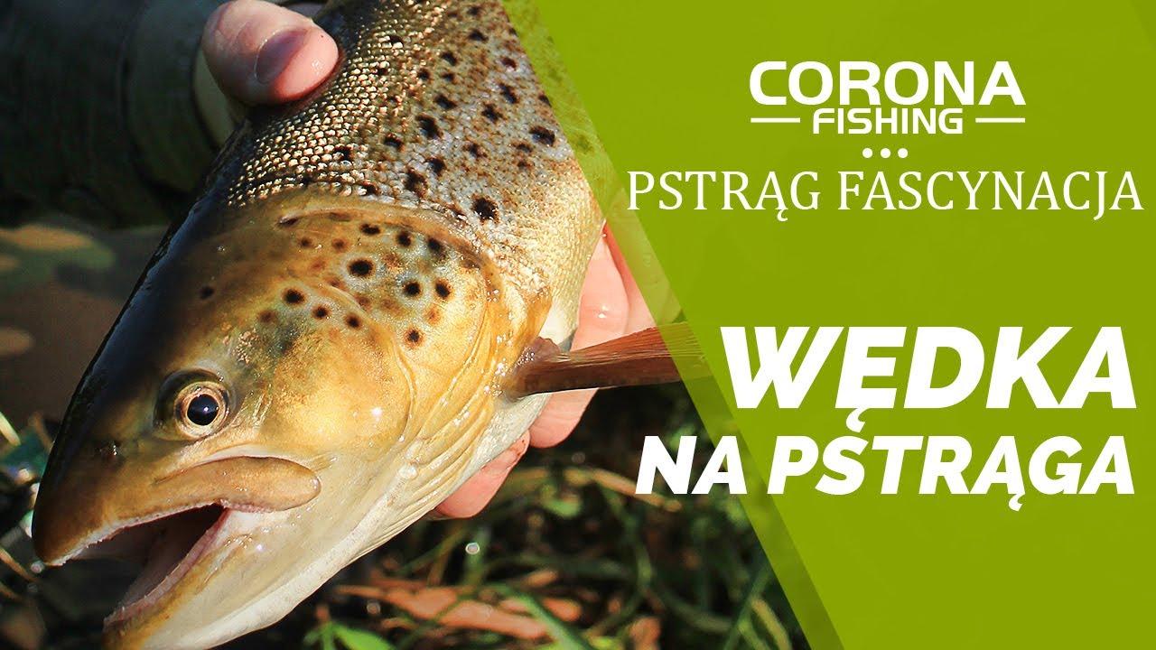 Wędka na pstrąga - Pstrąg Fascynacja Corona Fishing