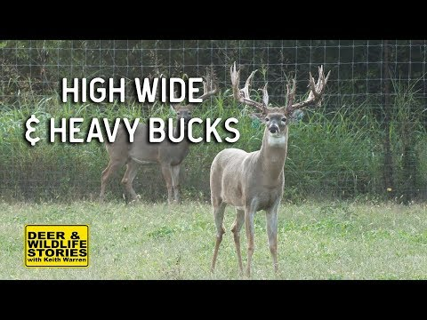 High Wide and Heavy Whitetails | Deer & Wildlife Stories
