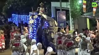 Два наряженных слона побежали на толпу во время буддистского фестиваля на Шри-Ланке