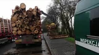 Nieprawidłowe transporty drewna