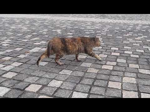 猫にいさんの『ニャ~tube』~川崎、まだら模様の「だらちゃん」。