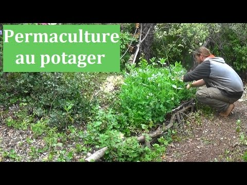 Permaculture et agro cologie au potager youtube for Exemple potager permaculture