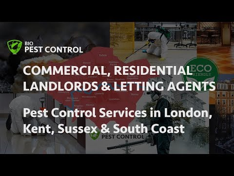 Commercial & Residential Pest Control Services In London: Rodents, Rats & Mice Control
