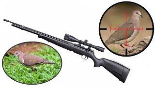 Cacería de Palomas 1 - Dove Hunting 1 - PCP Benjamin Maximus Cal 177.