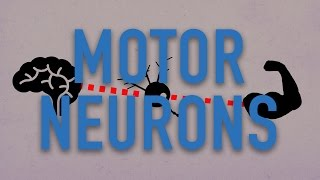 What Makes Us Move? Motor Neurons Explained | Lab Life