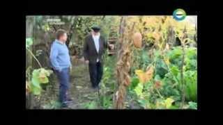 Молокане Ивановки в Азербайджане - Мир Тв
