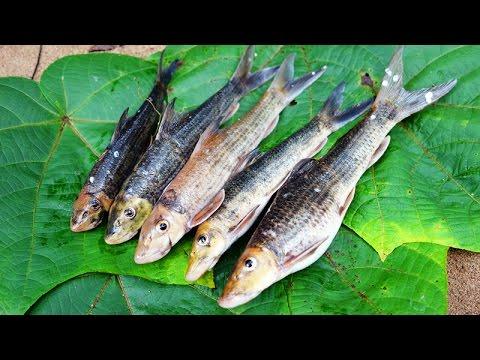 ĐI BẮT CÁ SUỐI - PHẦN 1 ( Jungle Fishing - P1 )
