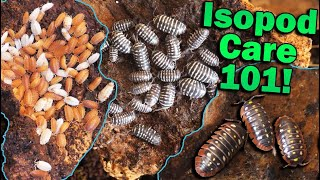 How to Care for Isopods!