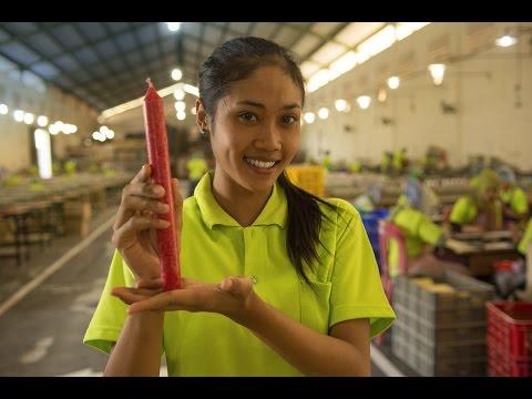 GEPA Fair Trade-Kerzen von Wax Industri