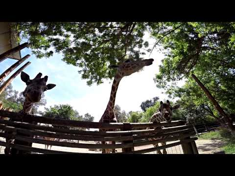 Chaffee Zoo | Fresno Ca (ADVENTURE)