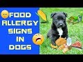 Food Allergy Signs in Dogs