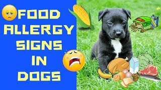 Food Allergy Signs Dogs