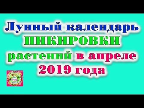 Лунный календарь для пикировки растений в апреле 2019 года