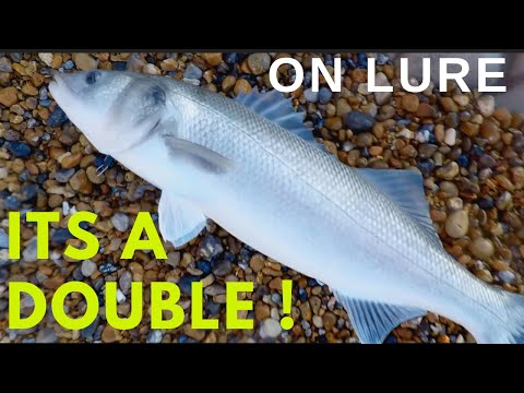 12lb Bass SHORE Caught On Lure In Daylight-Fish Of A Lifetime