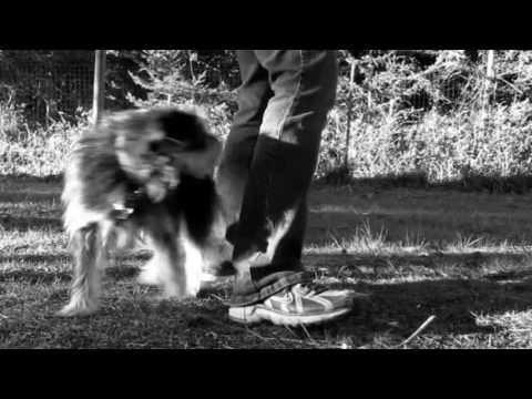 Funny dog videos – funny dog trick video