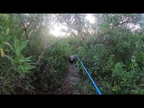 VIDEO: Florida Fisherman Trips Running Away From Alligator That Crashes His Fishing Spot