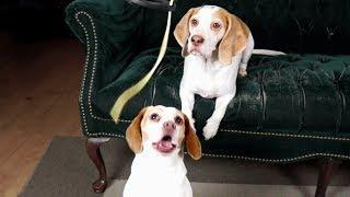 Смешные собаки Приколы про собак Funny Dogs 2019 Самые Новые шутки