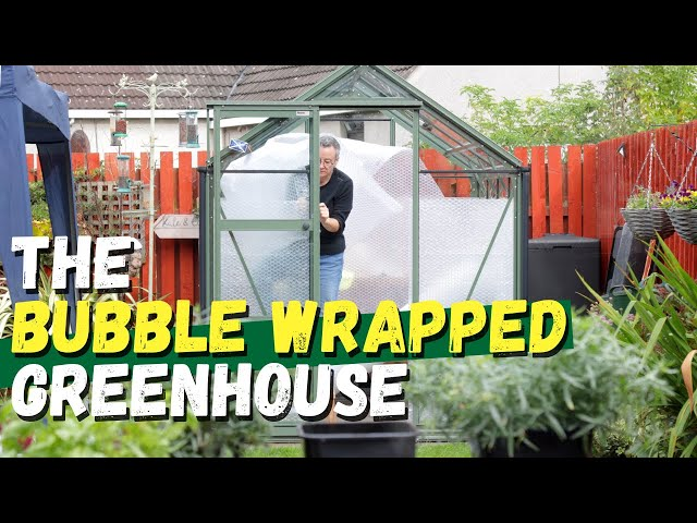 An update on our bubble-wrapped greenhouse