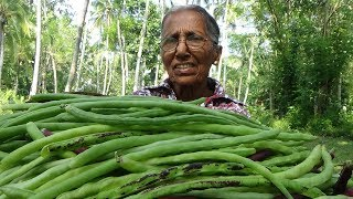 Village Vegetable Recipe ❤ Cooking Long Beans with Coconut by Grandma   Village Life