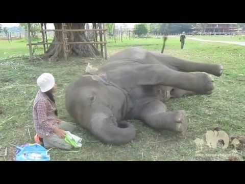 TongJaan lullaby at elephant nature park