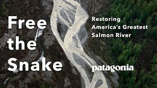 Free the Snake: Restoring America's Greatest Salmon River