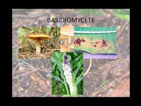 AP Biology cvitale Fungi.mp4