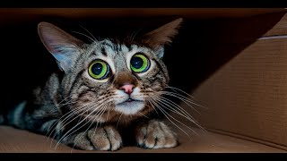 ЧЕЛЛЕНДЖ / Чего боится котенок Тигр? Угадай ! ))  Развивающий канал Супер Милана ТВ