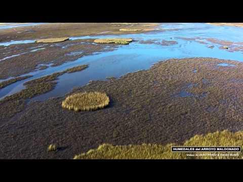 Humedales del Arroyo Maldonado - Uruguay