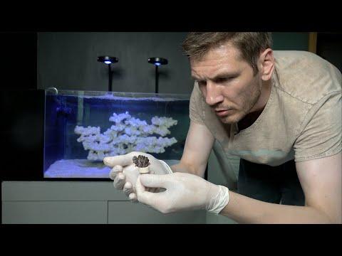 Видео: Запуск морского аквариума. 2 серия.  Первый коралл