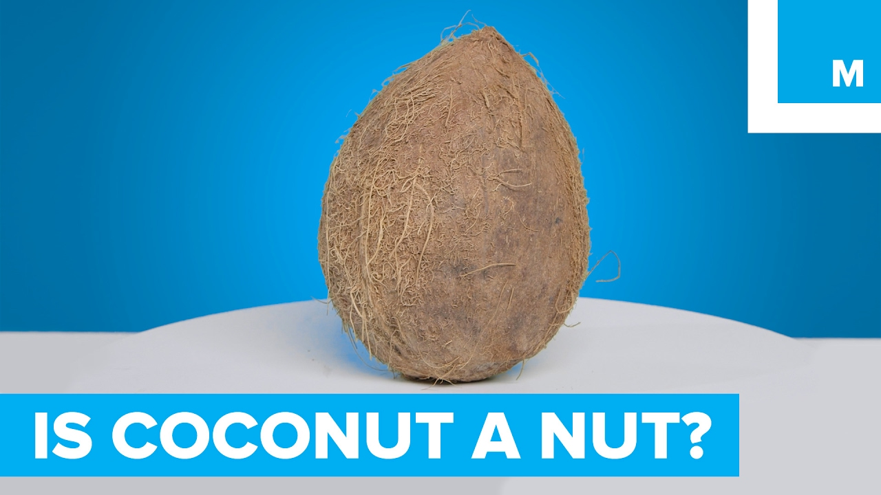 is a coconut a nut sharp science youtube