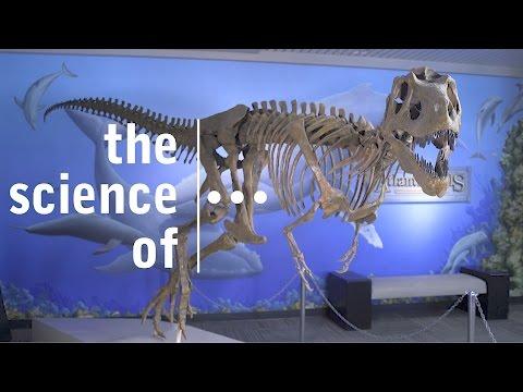 Nanotyrannus… A controversial Dinosaur (Darwin & Dinosaurs)