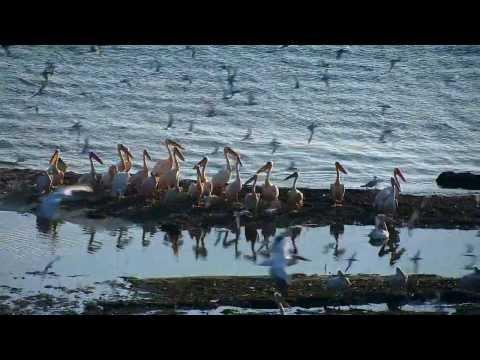 Chillout Nature - Europe - Donau,   Danube, 1/2