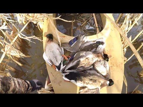 Harsons Island Duck Hunting