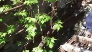 18.04.2014г. Спасение собаки из коллектора, г. Николаев, НГОЗЖ