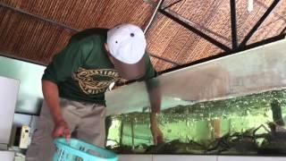 Vietnam Aquaculture 2