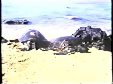 America - Harbor Documentary