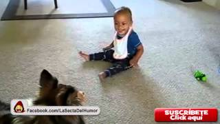 [HD][FUNNY/DIVERTIDO] Dogs and babies laughing. Perros y bebés riéndose. [COMPILATION]
