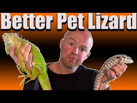 Iguana Vs Tegu - Better Pet Lizard