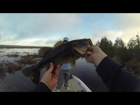 My Most Bass Caught In A Day On Memorial Lake Eglin AFB And Gator Lakes Hurlburt AFB, Florida!