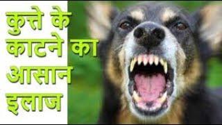 कुत्ते के काटने का बढ़िया इलाज | gharelu upay