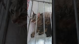 Кошки полосатые