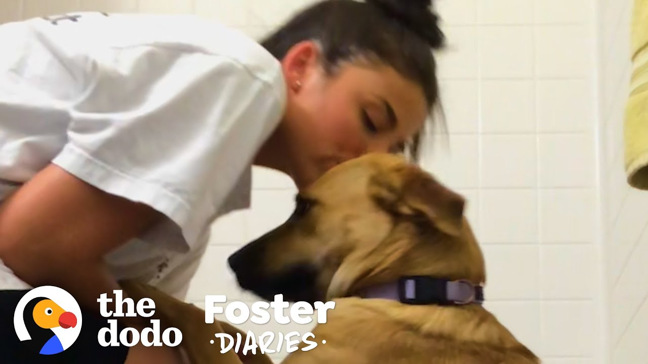 College Student Can't Say Goodbye To Her Foster Dog   The Dodo Foster Diaries