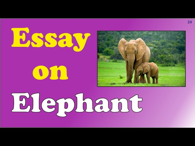 Essay on Elephant